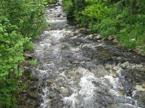 Речка Эстюба впадает в Телецкое озеро
